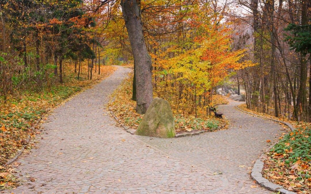 denver career coach transformational power of fall