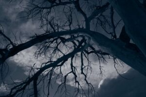 Dark Creepy Tree, Limiting Self-Beliefs and how to overcome them, Denver therapy, online life coach