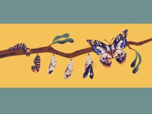 Reinvent Yourself: Illustration of butterfly growth cycle, pupa, chrysalis.